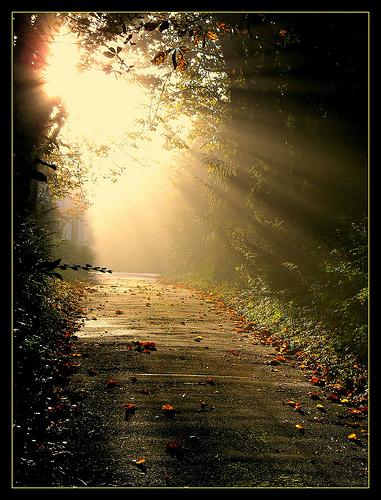 Divine Light2